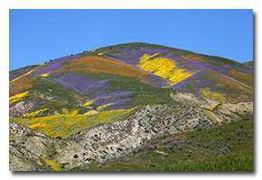 blog-1704-carrizo-plain.png